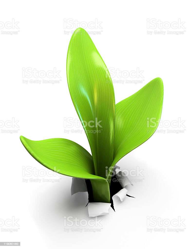 A young sprout growing alone on a white background  royalty-free stock photo