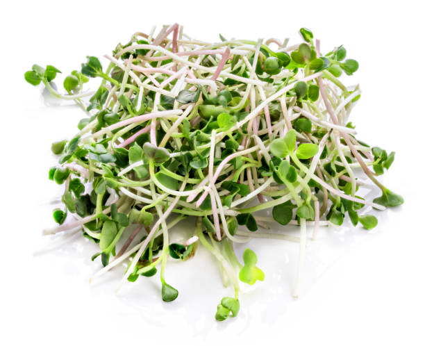 young sprout microgreen isolated with shadow. clipping path. - erba medica foto e immagini stock