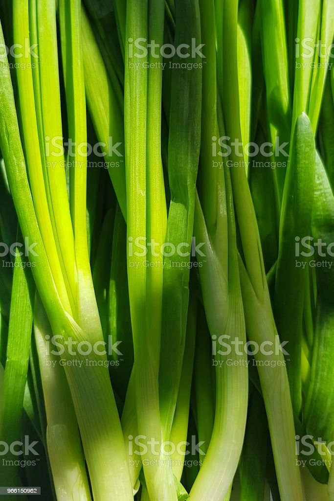 Young stems of fresh green onions close-up. - Royalty-free Beauty Stock Photo