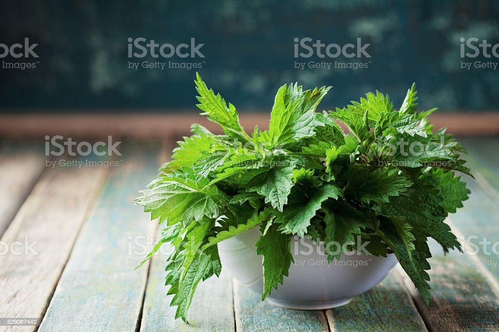 Young stinging nettle or urtica leaves, rustic style stock photo