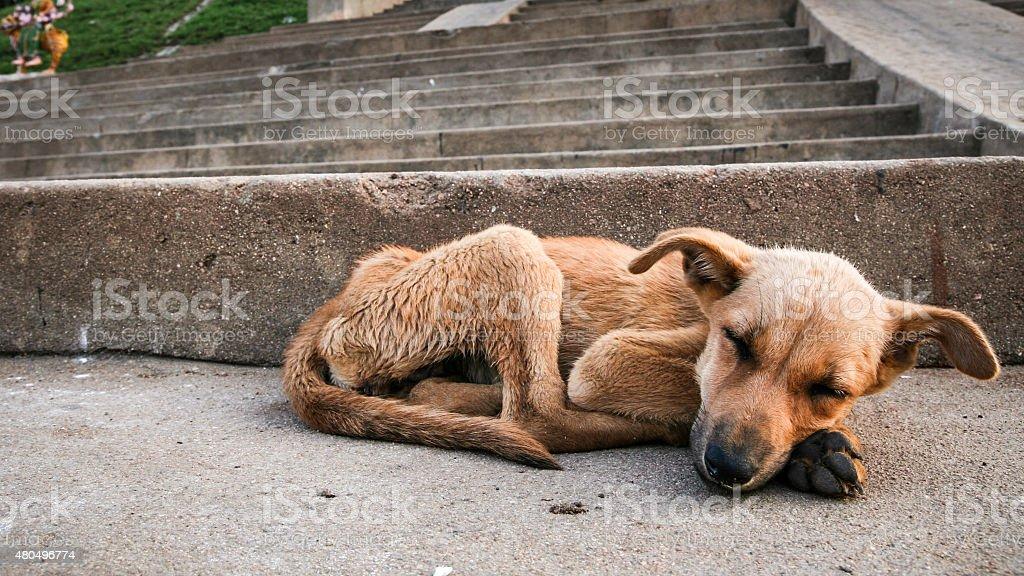 Young stray dog sleeping stock photo
