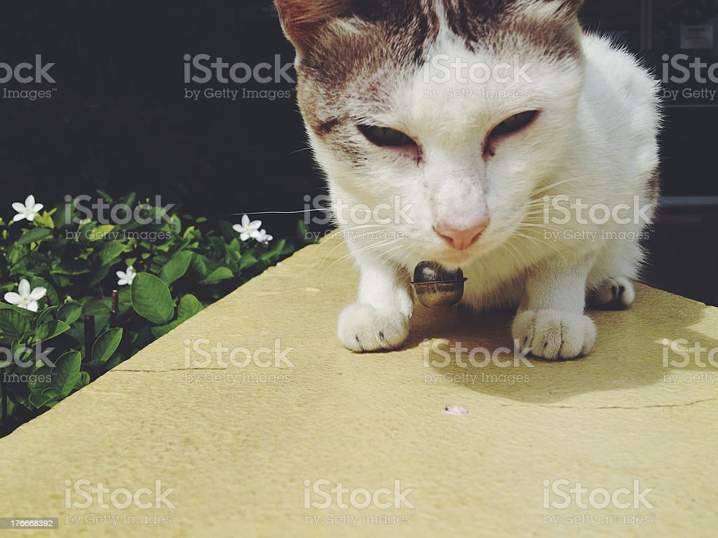 Young street cat royalty-free stock photo