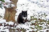 Young striped cat on a snowy day in nature in halkalı küçükçekmece istanbul