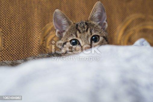 Young striped kitten hiding behind a pillow.