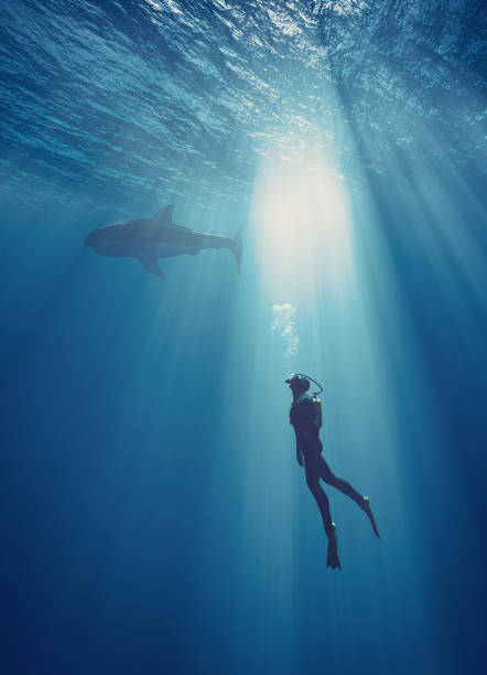 young swimmer - underwater diving stock photos and pictures