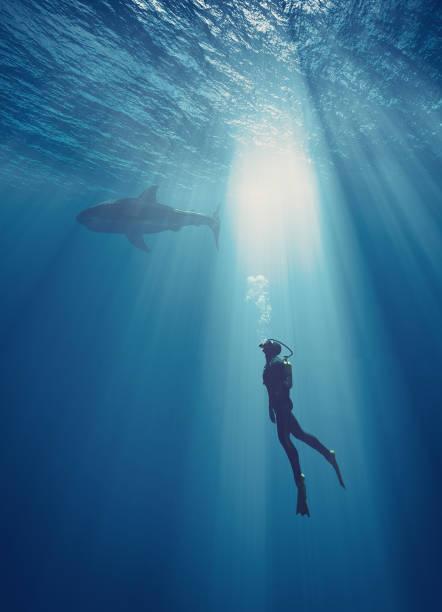 jeune natation - plonger dans photos et images de collection