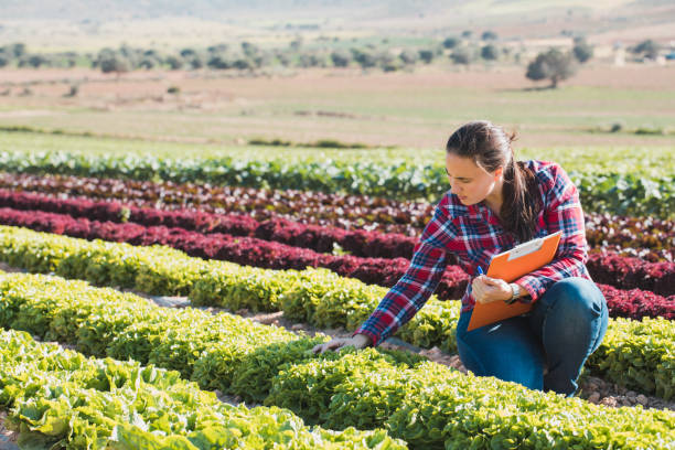 young technical woman working in a field of lettuces with a folder - agriculture stock pictures, royalty-free photos & images