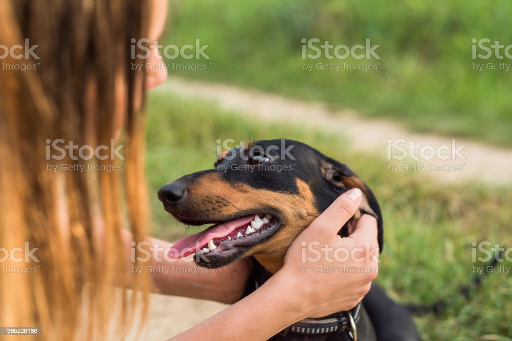 Young teenage loves her Dachshund dog. royalty-free stock photo