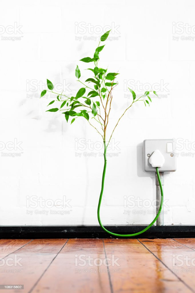 Young tree growing from a plug royalty-free stock photo