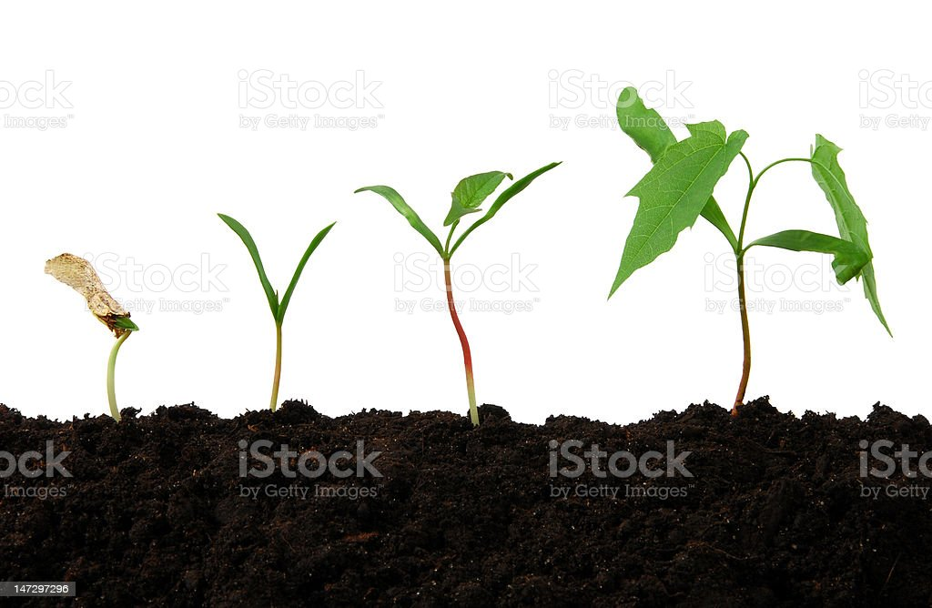 Young tree growth royalty-free stock photo