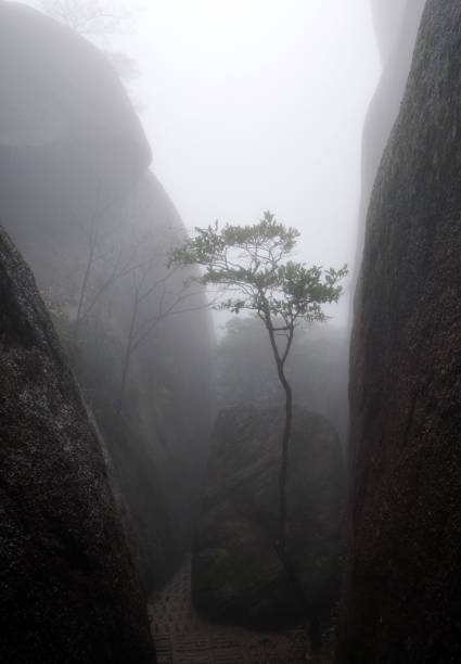 Young tree in fog stock photo