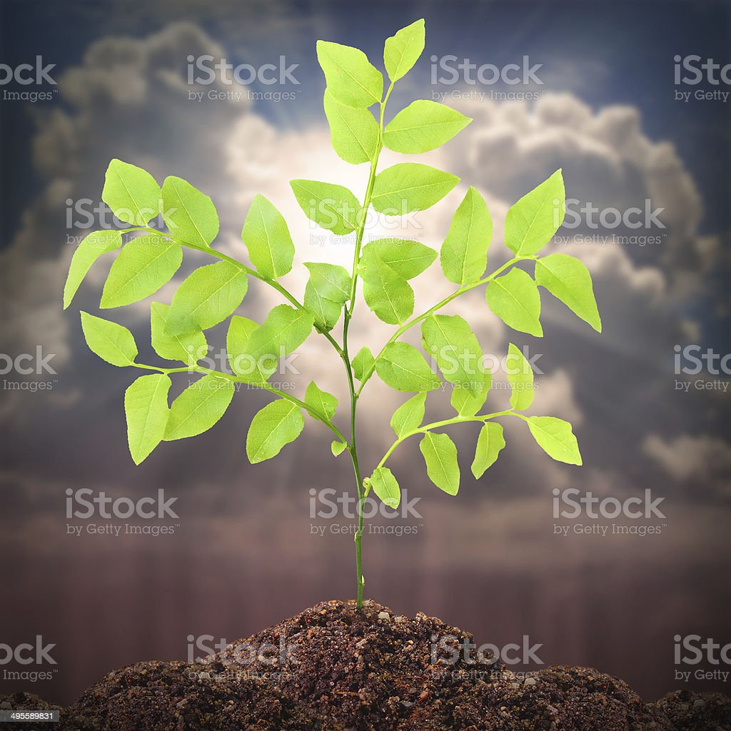 Young tree. stock photo