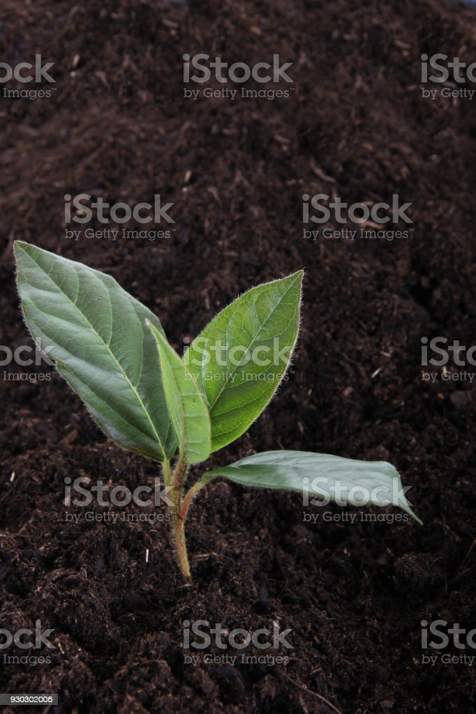 young tree stock photo