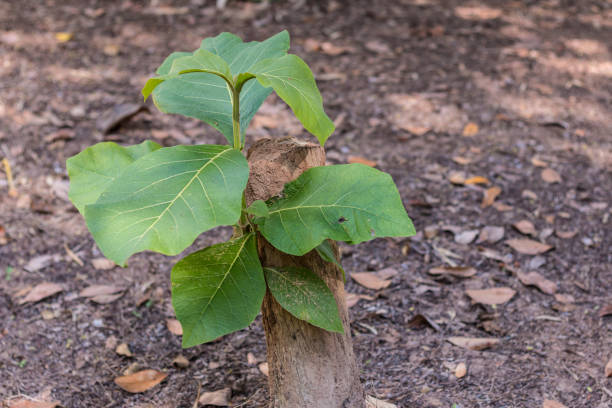 Young tree seedling grow from stump, concept of hope and rebirth stock photo