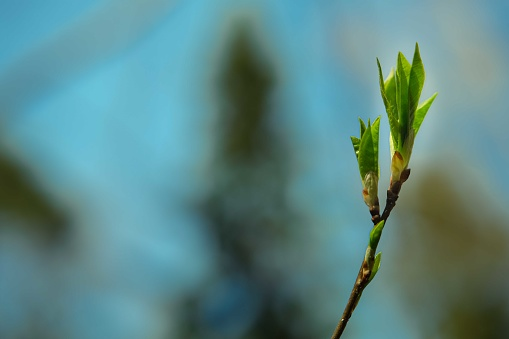 1094263056 istock photo Young tree sprout. 1224241276