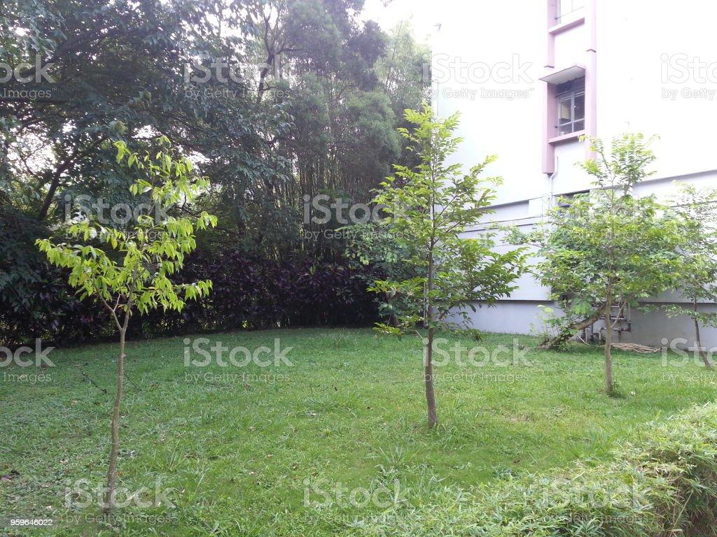 Árboles jóvenes crecen bajo el sol - Foto de stock de Aire libre libre de derechos