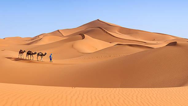 young tuareg con camellos en el desierto del sáhara del oeste, áfrica 36mpix - camello fotografías e imágenes de stock