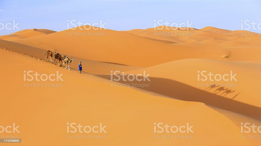Young  Tuareg with camel on Western Sahara Desert in Africa royalty-free stock photo
