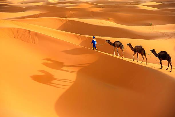 junge tuareg mit kamel auf westliche sahara in afrika - sahara stock-fotos und bilder
