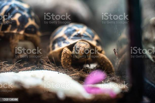 Young turtle eating fresh vegetable dof sharp focus space for text picture id1205138086?b=1&k=6&m=1205138086&s=612x612&h=4lkhdplh 8qcrp6cvdagzaaehhhvwwruslrvfnempti=