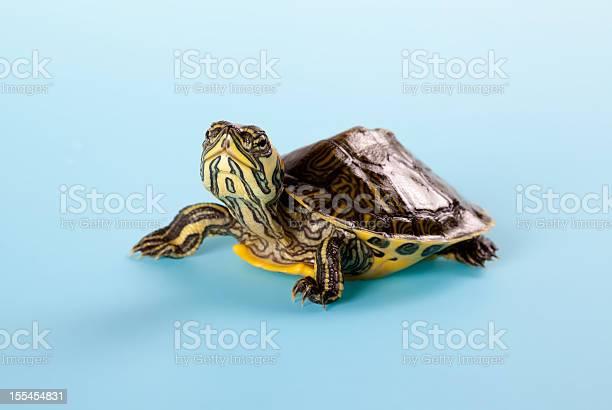 Young turtle picture id155454831?b=1&k=6&m=155454831&s=612x612&h=cxyzivjtu qh4mggx wq4rv0kwasyaqo06wmsytc8dw=