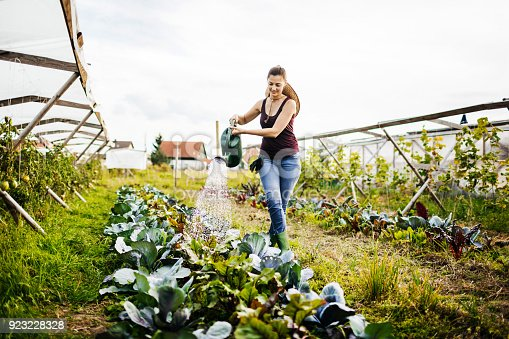A young urban farmer carefully watering her organic crops by hand using a watering can.