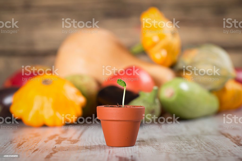 Young vegetable sprout on a wood royalty-free stock photo