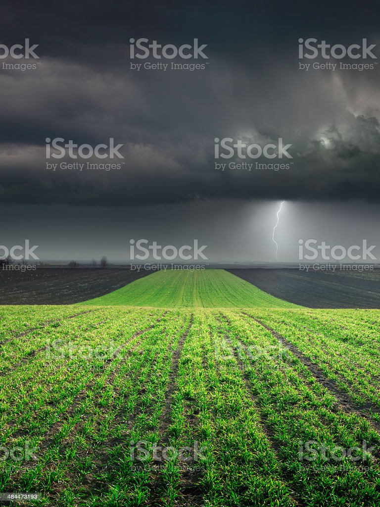 Young wheat crop in field against large storm stock photo