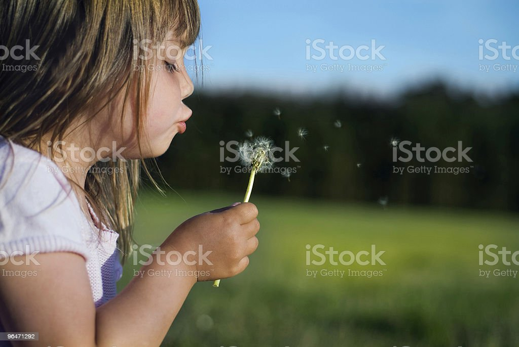 Young white girl blows dandelion fluff in field royalty-free stock photo