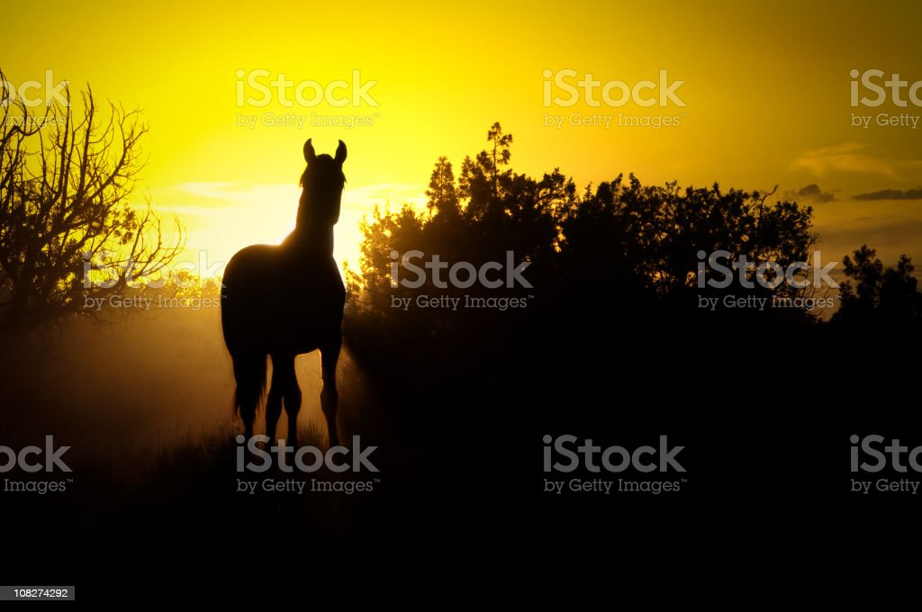 Young Wild Horse royalty-free stock photo
