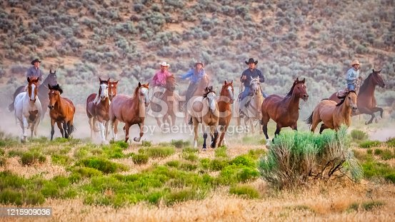 Group of Cowboys chasing a herd of young wild horses. Bringing them back home to their ranch. Galloping and running together on prairie grassland. Warm light close to dusk. Utah, USA, North America.