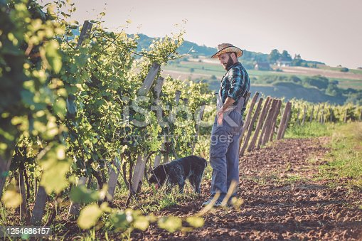 Young man working in the vineyard with his german wirehaired pointer