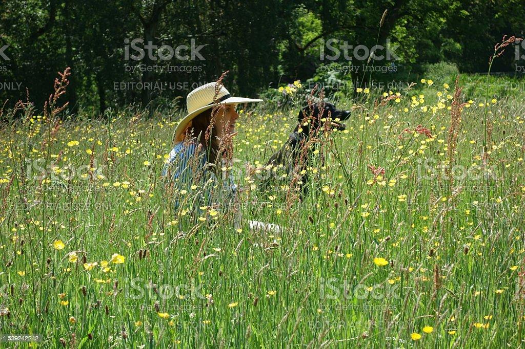 Mujer joven y el perro sentado en la pradera foto de stock libre de derechos