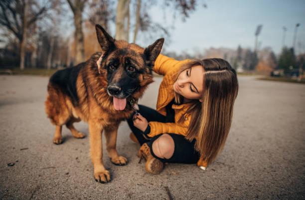 Young woman and German shepherd stock photo