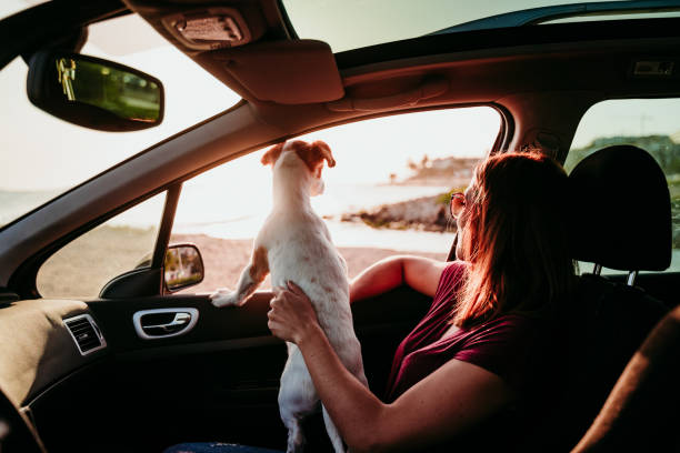 young woman and her cute jack russell dog in a car at sunset. travel concept stock photo