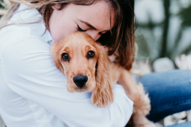 young woman and her cute puppy of cocker spaniel outdoors stock photo