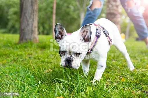 istock Young woman and her dog enjoying in the nature 929056284