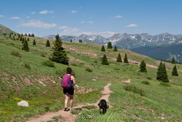 Young Woman Hiker on the Colorado Trail with Her Dog A young woman and her dog hike the Colorado Trail in the San Juan National Forest, Colorado, USA. san juan county colorado stock pictures, royalty-free photos & images