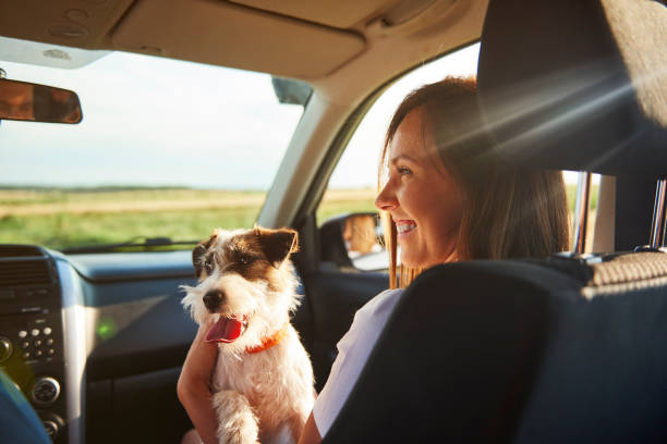 Young woman and her dog traveling together stock photo