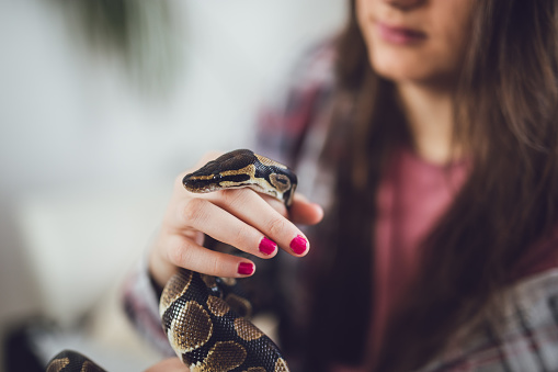 Picture of a beautiful snake and her young caucasian lady owner.