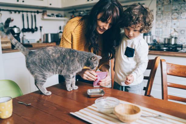 Young woman and little boy feeding cat picture id1082582770?b=1&k=6&m=1082582770&s=612x612&w=0&h=rumig 3yu8jcsowhmvdd3pcerlqnvu61zdo6zjq 4qi=