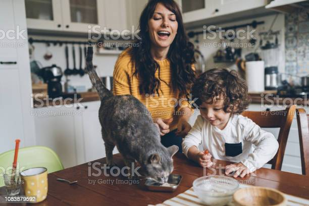 Young woman and little boy feeding cat picture id1083879592?b=1&k=6&m=1083879592&s=612x612&h=mmprnphomfghipjfakla0jstkqadckufocspyuw0ehc=