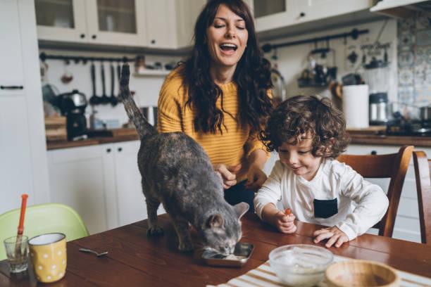 ung kvinna och liten pojke utfodring katt - kattdjur bildbanksfoton och bilder