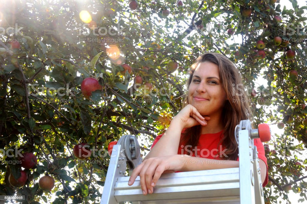 A Young Woman Apple Picking stock photo