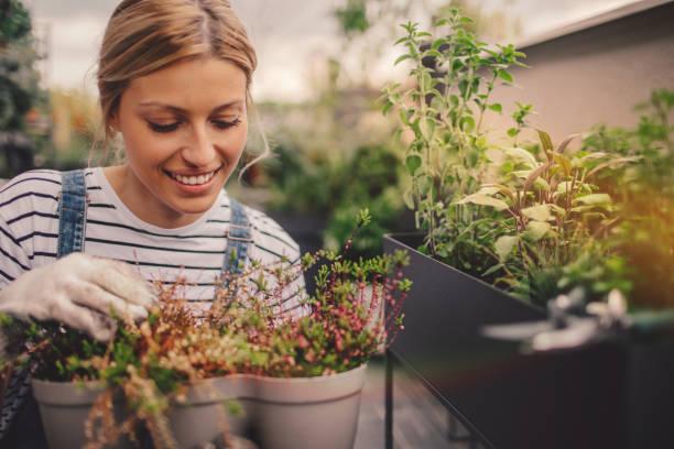 junge frau, die vermittlung von pflanzen in ihrem dachgarten auf dem - urbaner garten stock-fotos und bilder