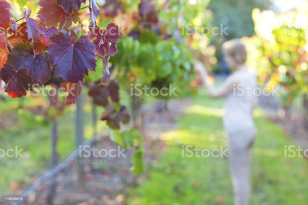 young woman at a vineyard royalty-free stock photo