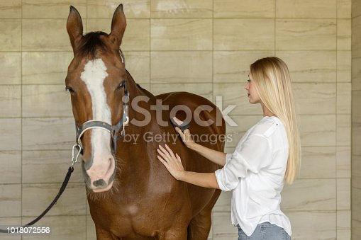 Young woman combs a horse