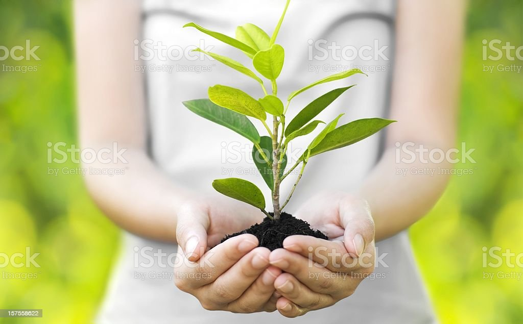 A young woman cradling a tree sprout stock photo