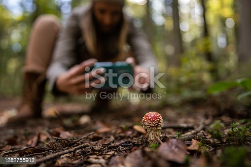 Young woman crouching in forest and taking picture of wild mushroom with mobile phone, mushroom in focus, woman blurred in background