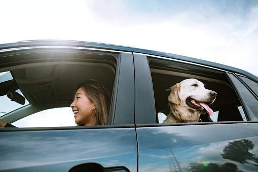 A happy Korean woman enjoys spending time with her Golden Retriever while driving her vehicle on a sunny day in Los Angeles, California.  Making fun travel memories together.